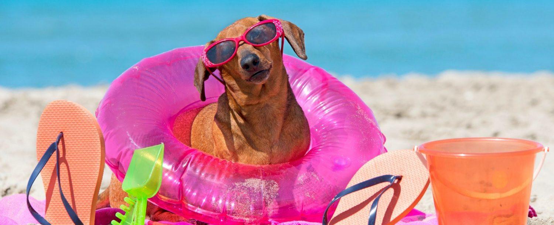 crystal beach pet friendly activities, dog beach