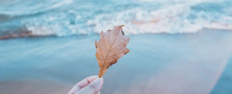 Fall_Pic