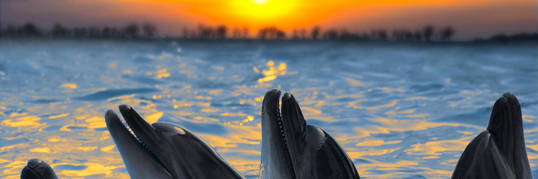dolphin tours crystal beach